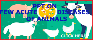 PPT  ACUTE  CASE ON   DISEASES   OF ANIMALS