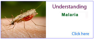 Malaria-for-seminar